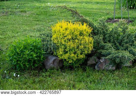 The Backjard With Group Of Bushes And Plants: Juniper, Phlox, Peony, Thuja, Barberry In Front Of Hou