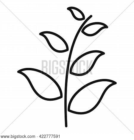 Essential Oils Field Plant Icon. Outline Essential Oils Field Plant Vector Icon For Web Design Isola