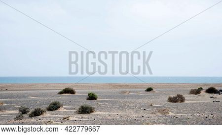 Arid Landscape Near The Coast At Lanzarote, Spain. Some Plants Growing On The Sand. Canary Islands,