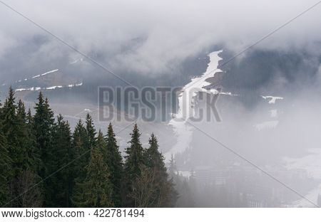 Spruce Forest On Autumn Or Winter Mountain Hills In Fog On Cloudy Weather