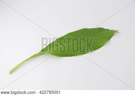 Green Leaves Of Turmeric ,curcuma Longa Ginger Medicinal, Herbal Plant Isolated On White Background.