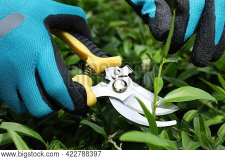 Worker Cutting Bush With Pruner Outdoors, Closeup. Gardening Tool