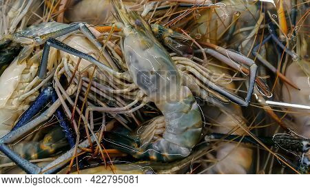 Sea Fresh Lobster At Street Market In Bangladesh. Seafood Concept. Raw Lobster For Cooking, Closeup.