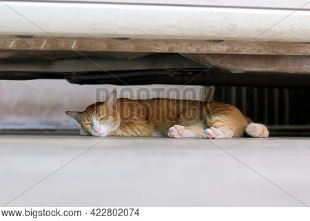 A Cat Is Sleeping Under The Car