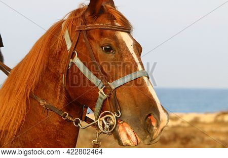 Portrait Of A Horse In A Clearing In A City Park
