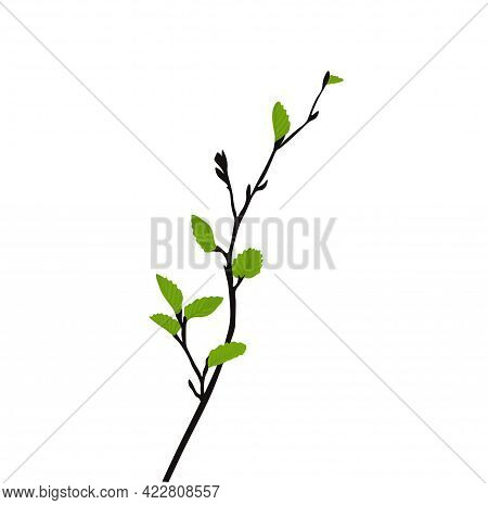 Branch With Young Leaf Sprouts Vector Stock Illustration. Shoots Of Trees With Fresh Green Foliage.