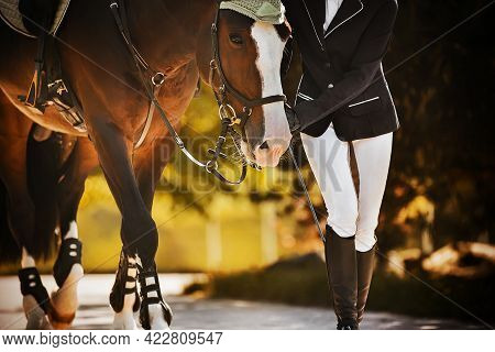 The Rider Leads Her Beautiful Bay Horse By The Bridle Rein Along The Road Among The Leaves Of Trees