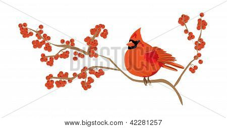 Red cardinal on a branch