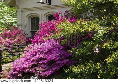Beautiful Garden Area With Green Hedge. Backyard Landscape Or A Park With Fence, Trees And Blossomin