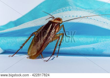 Cockroaches Are Sticking On A Mask, Disinfection Against Cockroaches.