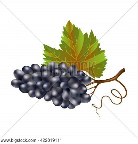 Blue Wine Ripe Grapes With A Leaf On A White Background. A Bunch Of Purple Grapes Close-up. Wine Ber