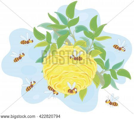 Angry Swarm Of Striped Wasps Flying And Buzzing Around Their Hive On A Branch In A Summer Forest, Ve