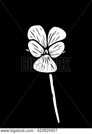 Vector Illustration Of A Field Violet Flower. Modern Floral Art, Isolated On A Black Background. Vio
