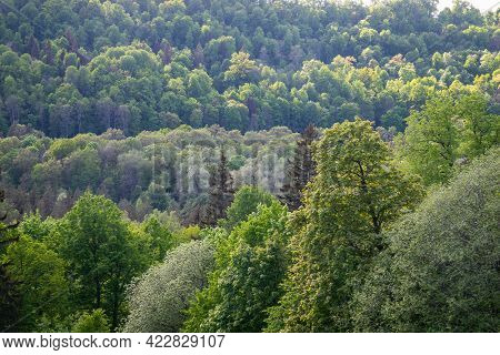 Misty Forest. Far Horizon. Spruce And Pine Tree Forest Abstract Texture Background