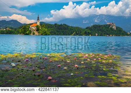 One Of The Most Visited Travel Location In Slovenia. Blooming Lotus Flowers On The Lake And Famous C