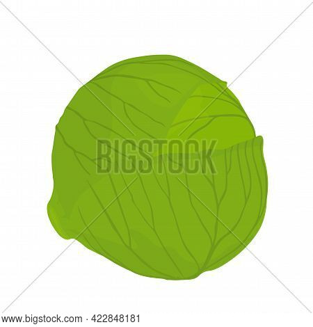 Cabbage Vector Stock Illustration. Head Of Brussels Sprouts Close-up. Isolated On A White Background