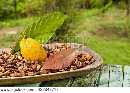 Theobroma Cacao - Dried Cocoa Beans With Fruit