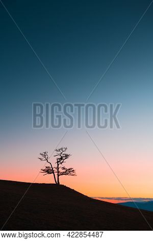Lonely Larch Tree On The Hill Against The Sky At Sunset. Baikal Lake, Siberia, Russia. Beautiful Nat