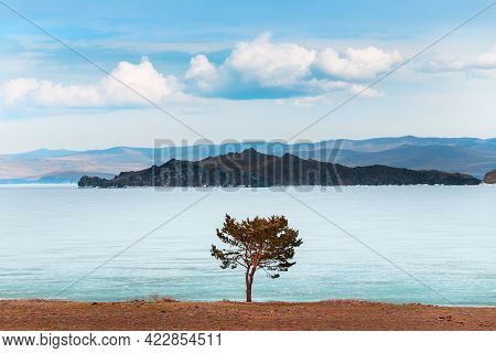 Beautiful Landscape Of Baikal Lake In Spring. Melting Ice And Lonely Pine Tree On The Shore Of Lake.