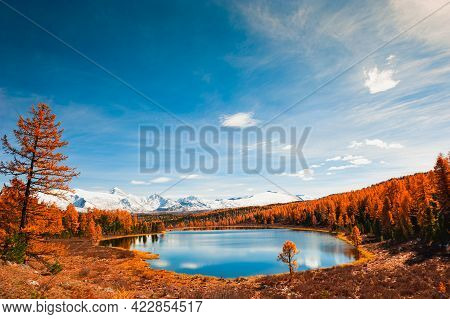 Kidelu Lake In Altai Mountains, Siberia, Russia. Snow-covered Mountain Peaks, Yellow Autumn Forest A