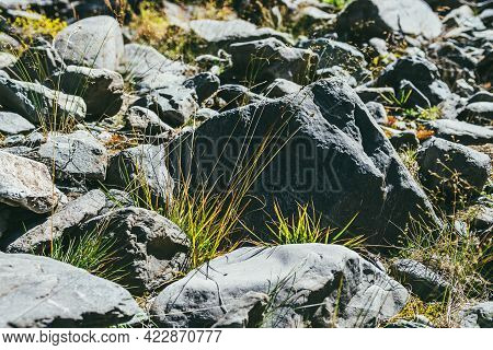 Colorful Sunlit Green Nature Background With Grass Among Stones In Bright Sun. Vivid Green Grass On