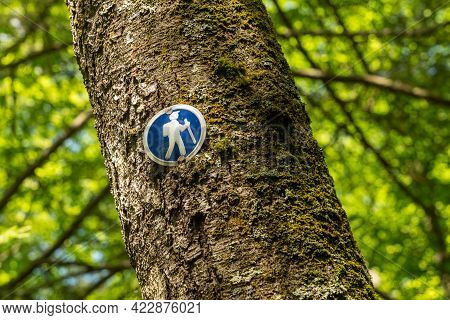 Blue Sign With A Hiker Nailed To Tree Trunk To Show The Way On A Forest Trail Or Hike