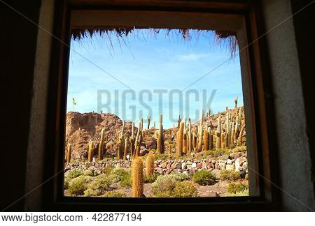 Trichocereus Cactus Field On The Isla Incahuasi Rocky Outcrop View From A Cottage's Window, Salar De