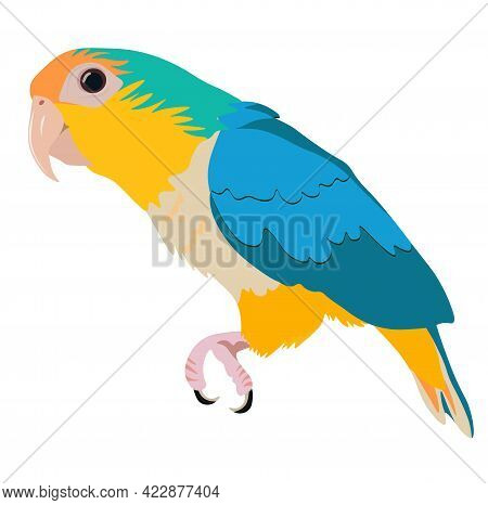 Vector Stock Illustration Of A Small Bird. Bright Green And Yellow Feathers. Beak. Parrot Forest Of