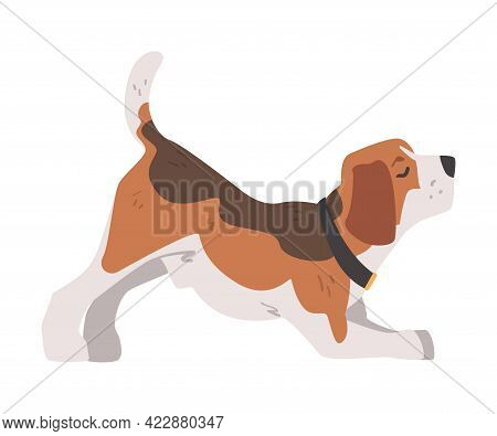 Cute Playing Beagle Dog Pet Animal, Small Dog With Brown White Coat And Long Ears Beagle Cartoon Vec