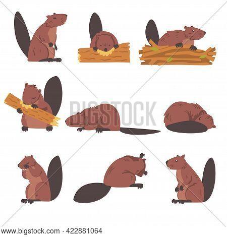 Cute Brown Beavers Set, Wild Rodent Animals Cartoon Vector Illustration