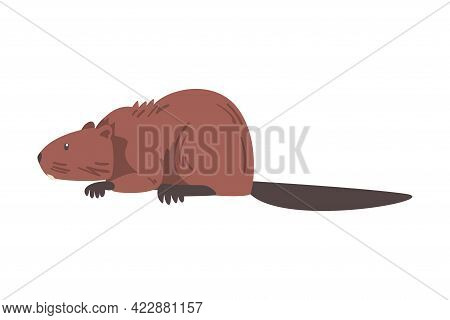 Cute Brown Beaver, Side View Of Wild Rodent Animal Cartoon Vector Illustration