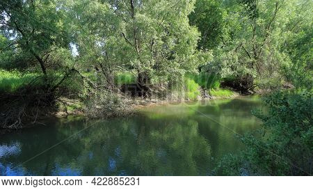A Small Picturesque River With A Calm Current And Green Water Flows Along Low Banks With Dense Green