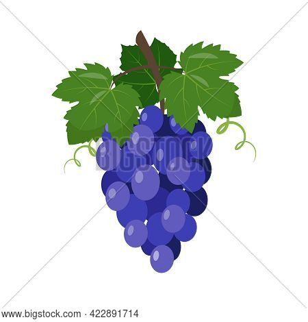 Red Wine Grapes Icon. Blue Grape Bunch With Berries And Leaves Isolated On White Background. Fresh F