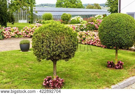 Landscape Design With Plants, Flowers And Topiary At Residential House In Reichenau Island, Germany.