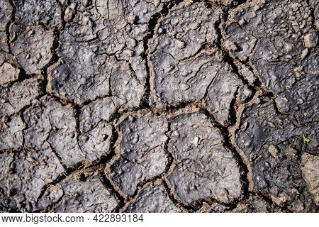 Cracks In The Ground After Rain. Dried Earth With Cracks. After The Flood. Cracked Dry Crust.