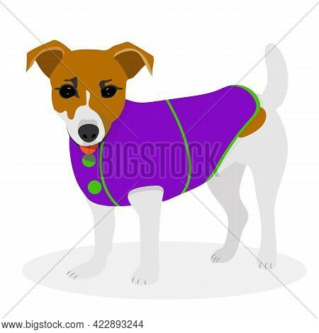 Jack Russell Terrier Dog In Clothes. Vector Flet Illustration.