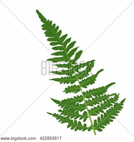 Vector Stock Illustration Collection Of Green Forest Fern Frond Maidenhair Greenery Art Foliage Natu