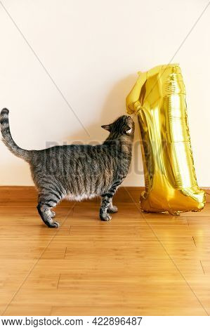 Gray Tabby Cat Sniffs The Inflatable Number One On The Floor In The Room