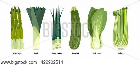 Green Vegetables Set. Asparagus, Leek, Green Onion, Zujcchini, Bok Choy, Celery. Colorful Illustrati