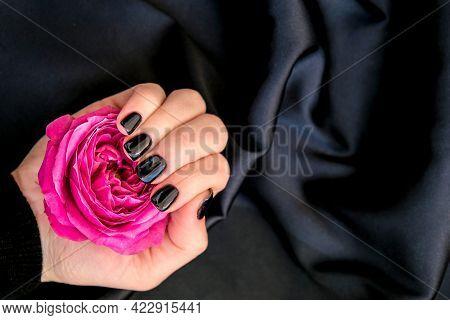 Black Nails Manicure Hold Pink Rose Flower On Black Silk Fabric. Minimal Flat Lay Nature. Female Han