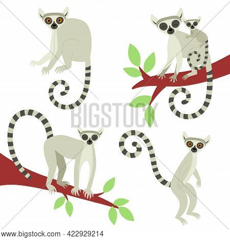 A Set Of Lemurs In Different Poses. Exotic Cute Animals Of Madagascar And Africa. Vector Illustratio