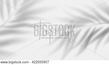 Realistic Transparent Shadow From A Leaf Of A Palm Tree On The White Background. Tropical Leaves Sha