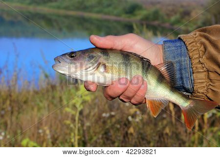 Bass In The Hand Of Fisherman