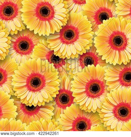 Seamless Pattern Of Yellow-pink Gerberas. Bright Colorful Summer Background. Chaotic Arrangement Of