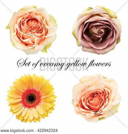 Set Of Different Flowers: Ash Pink Rose, Orange-cream Rose, Yellow-red Gerbera. Flowers On A White B