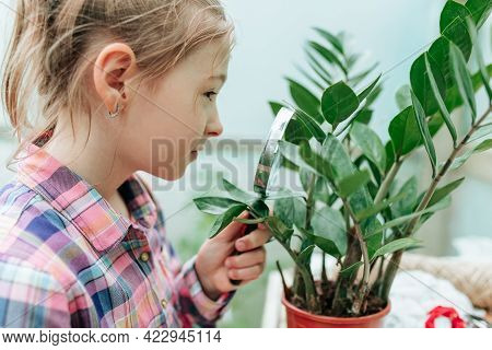 Curious Child Girl In Greenhouse Using A Magnifying Glass To Look Through, Outdoors Nature. Happy Li