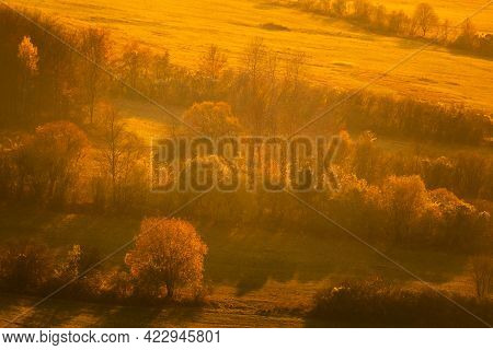 Rows Of Trees At A Meadow Colored By The Setting Sun In Autumn.