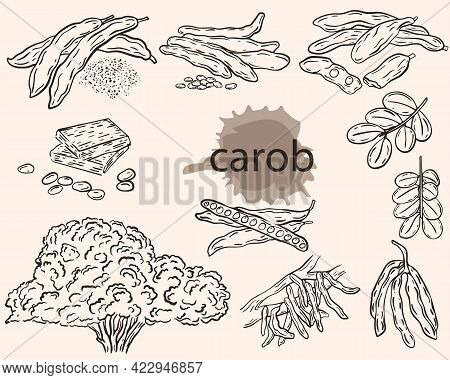 Carob Sketch, Vector Set. Carob Fruits, Pods With Grains, On A Branch And In Powder. Ceratonia Tree