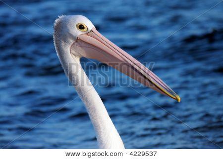 Single Pelican A