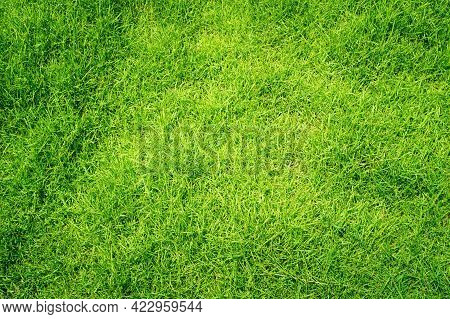 Green Grass Texture Background Top View Of Bright Grass Garden Idea Concept Used For Making Green Ba